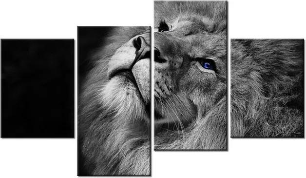 Tlačený obraz Modrooký lev 120x70cm 3123A_4AA