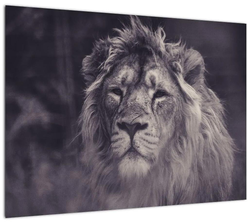 Obraz leva (70x50 cm), 40 ďalších rozmerov