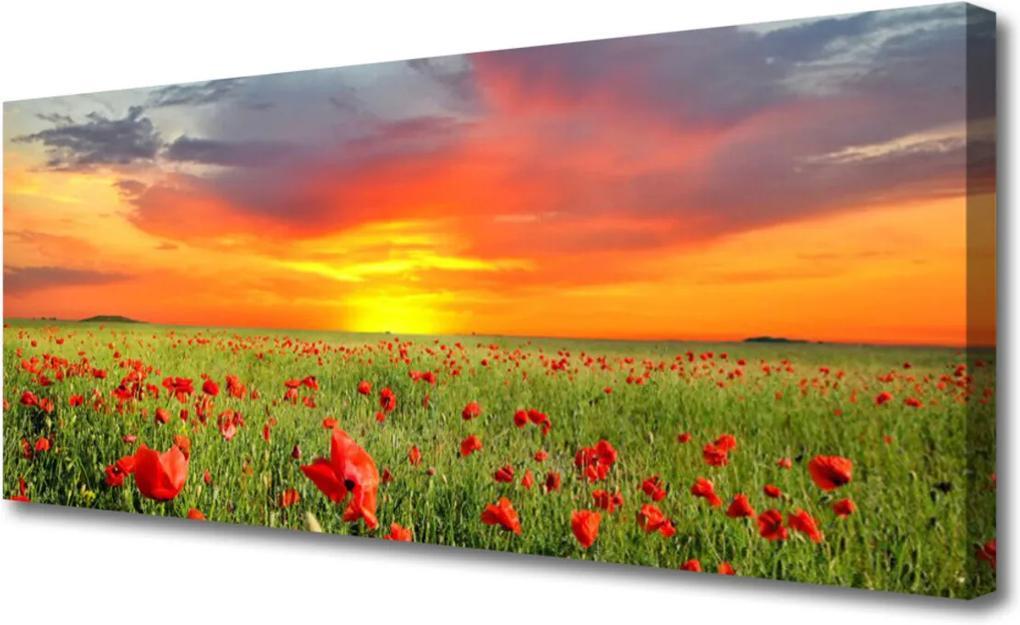 Obraz Canvas Máky slunce rostlina příroda