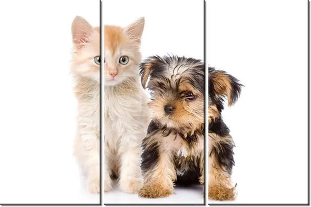 Tlačený obraz Roztomilý psík a mačička 90x60cm 2235A_3J