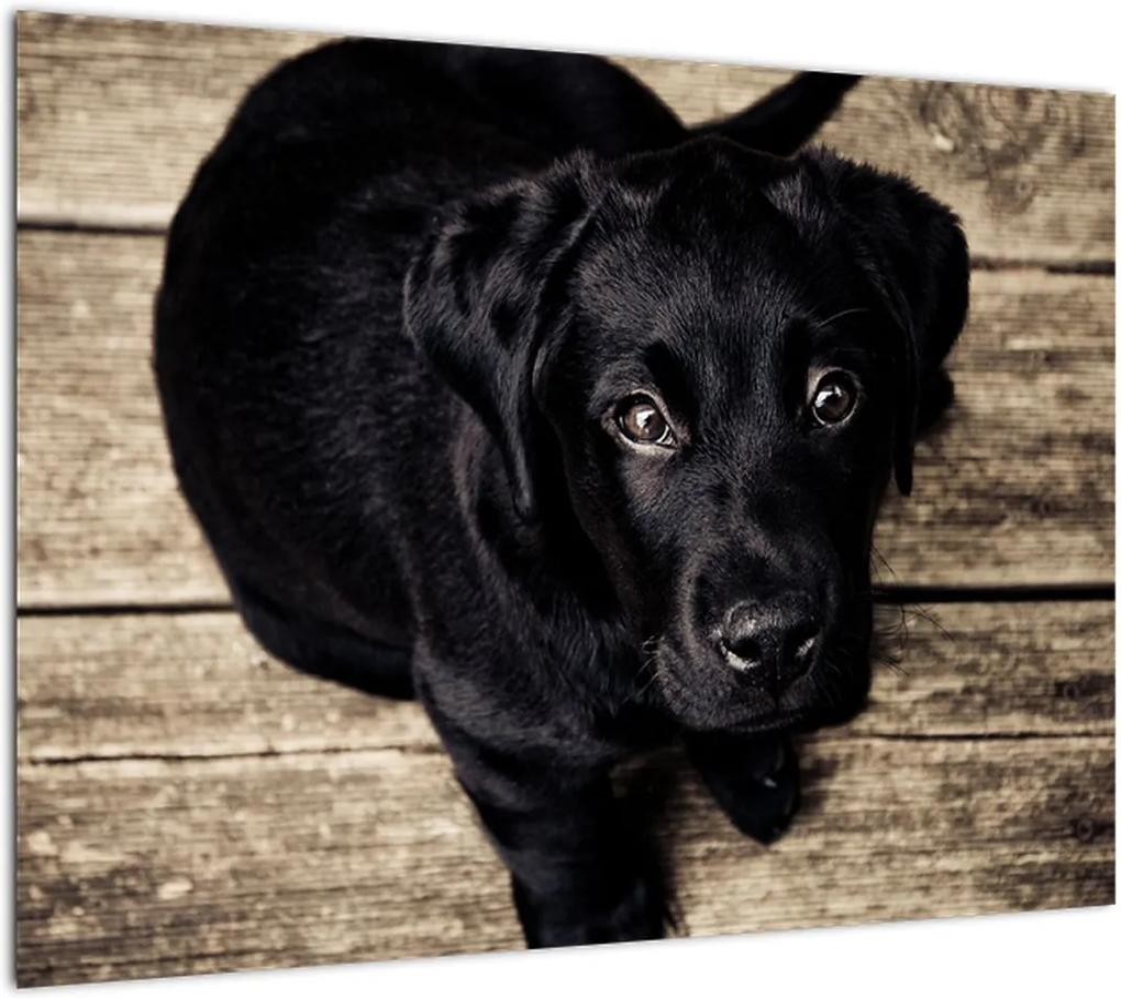 Obraz čierneho šteňaťa (70x50 cm), 40 ďalších rozmerov