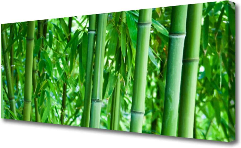 Obraz na plátně Bambus Stonka Rastlina
