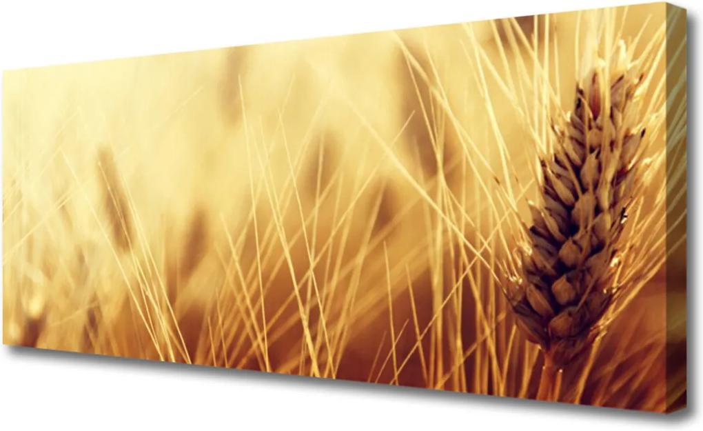 Obraz Canvas Pšenice rostlina příroda