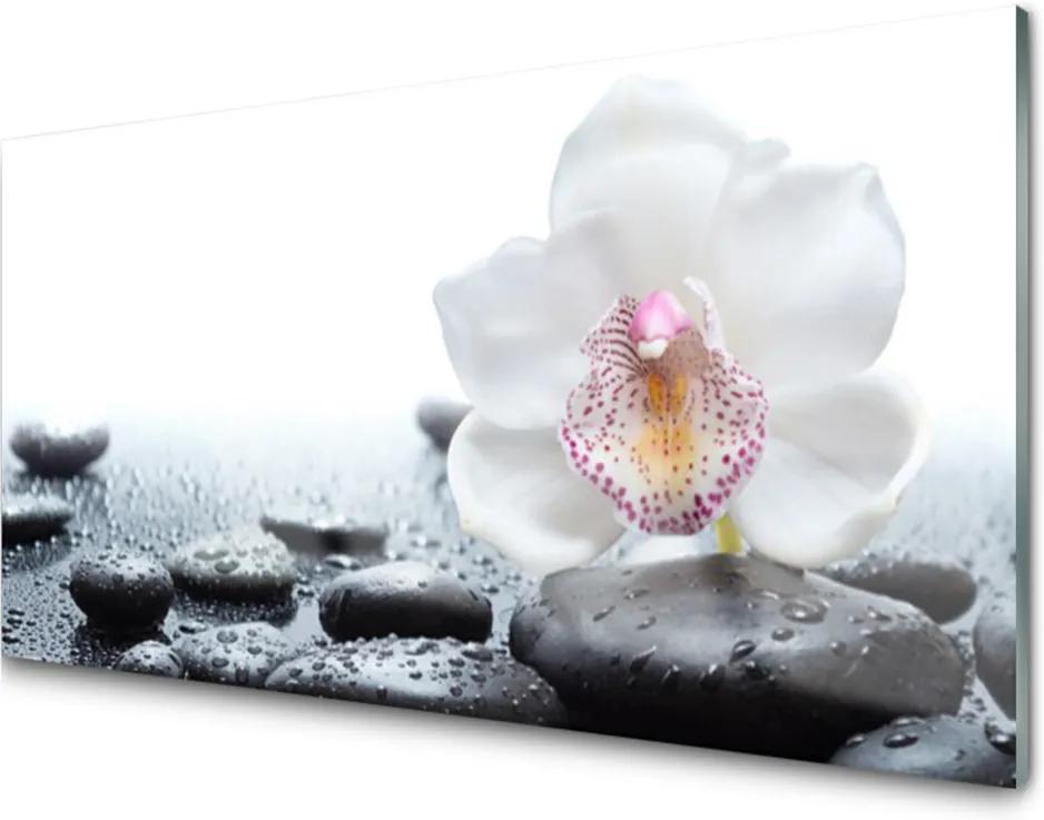 Sklenený obklad Do kuchyne Kvet Kamene Umenie