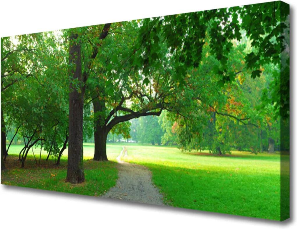 Obraz Canvas Stezka stromy příroda