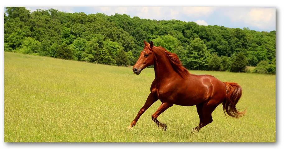 Moderný foto-obraz akryl na stenu Kôň na lúke pl-oa-140x70-f-68119926