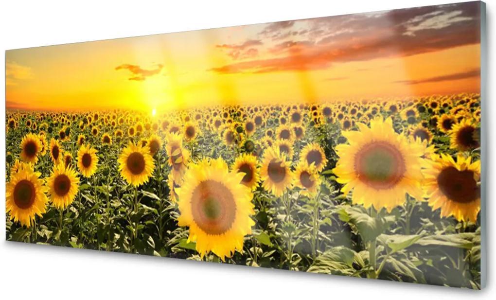 Obraz na akrylátovom skle sklenený Slnečnica