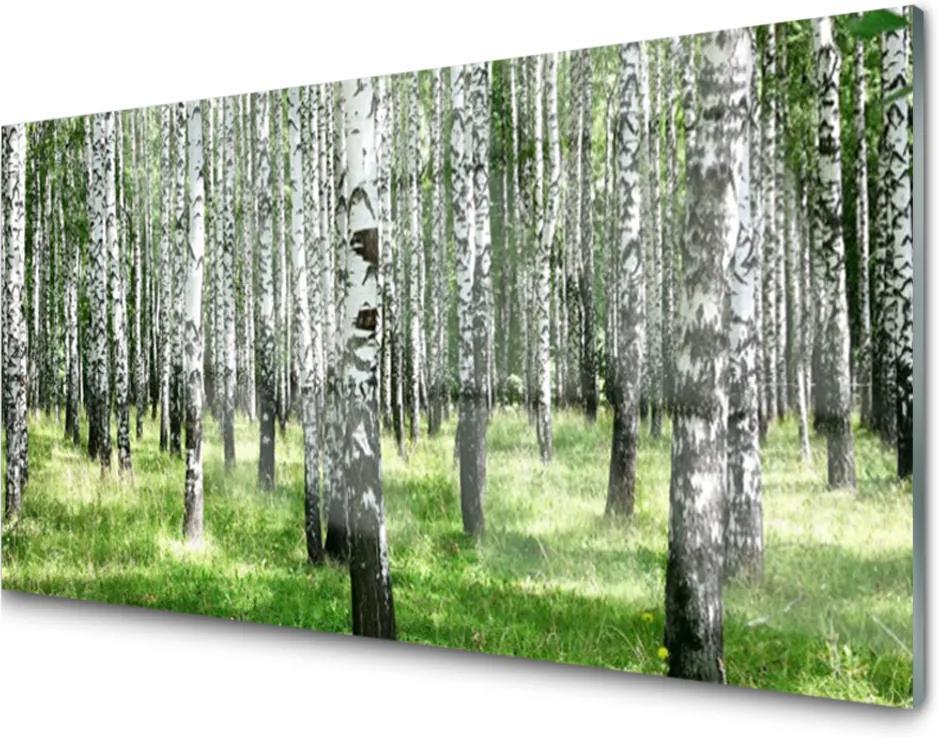 Skleněný obraz Les Tráva Rastlina Príroda