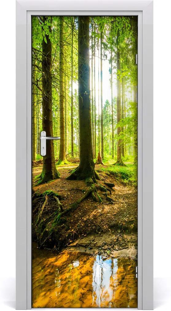 Fototapeta na dveře samolepící Slunce v lese