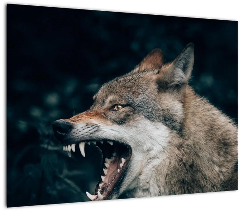 Obraz vlka (70x50 cm), 40 ďalších rozmerov