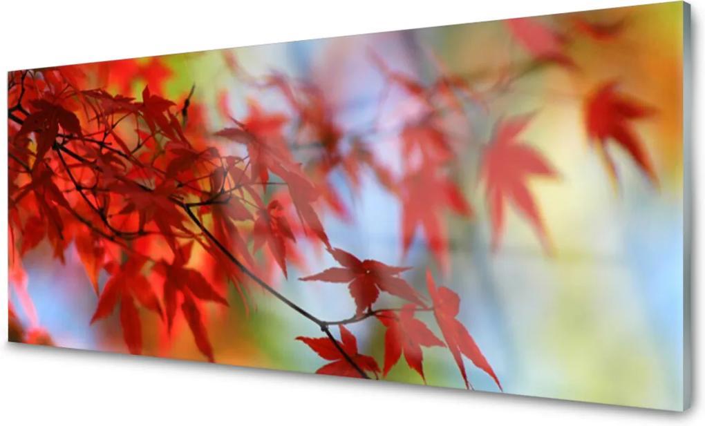 Akrylové obraz Skleněný listy příroda