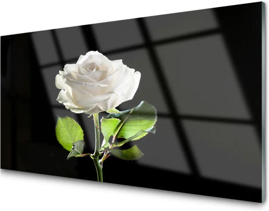 Sklenený obklad Do kuchyne Ruže Kvet Rastlina