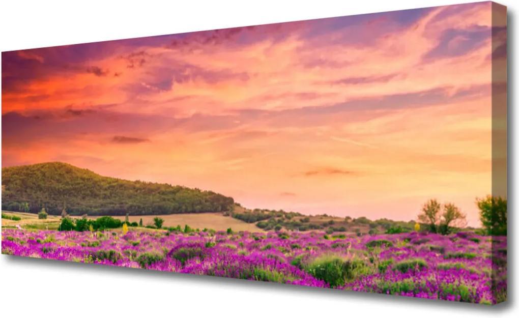 Obraz na plátně Louka květiny krajina