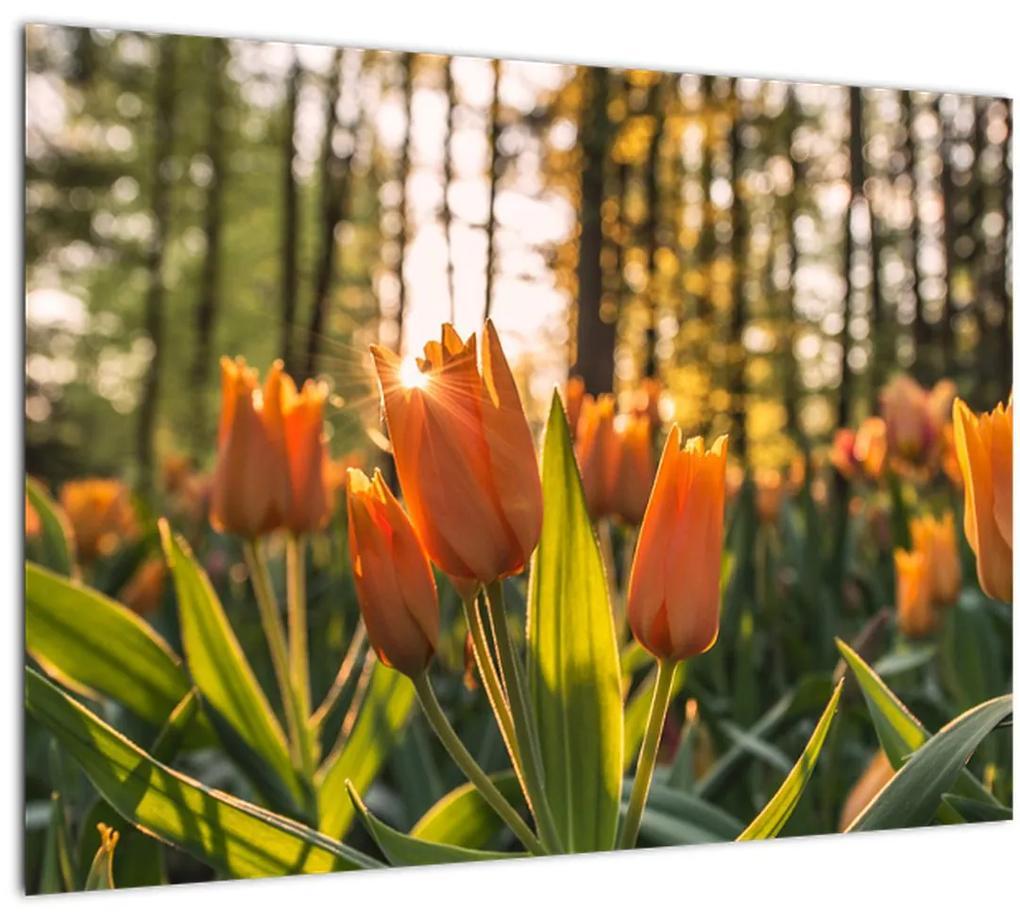 Obraz - kvety tulipánov (70x50 cm), 40 ďalších rozmerov