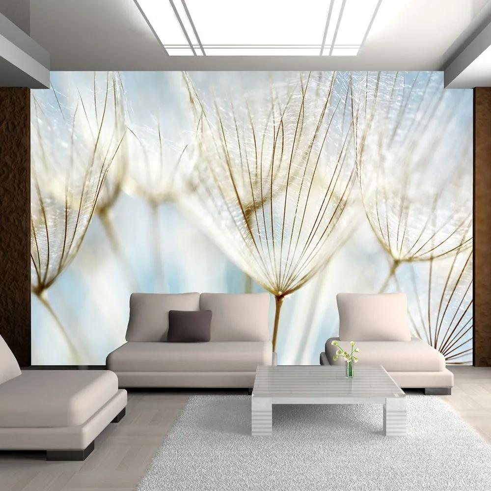 Fototapeta - Abstract dandelion flower background 200x154