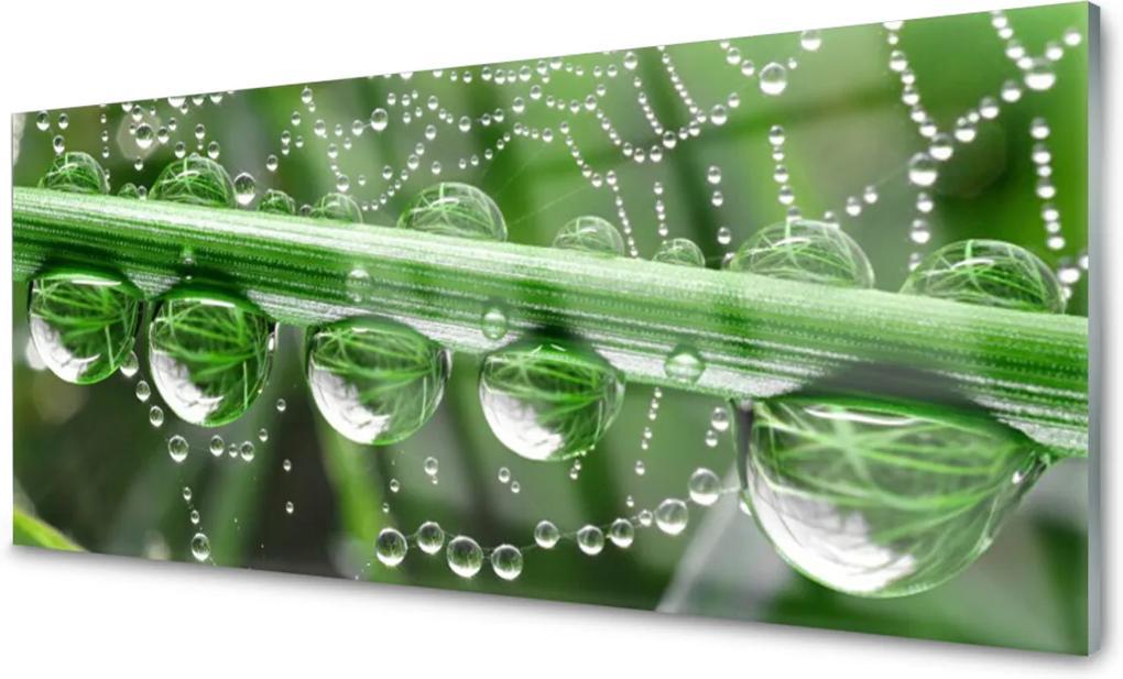 Obraz na skle Pavučina kapka rostlina