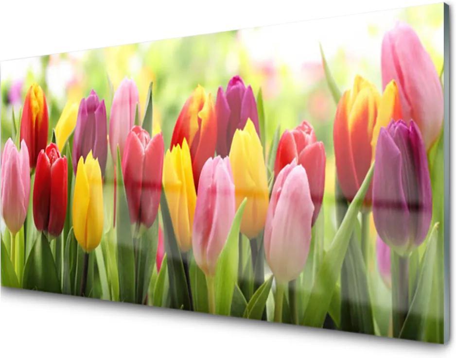 Skleněný obraz Tulipány Kvety Príroda