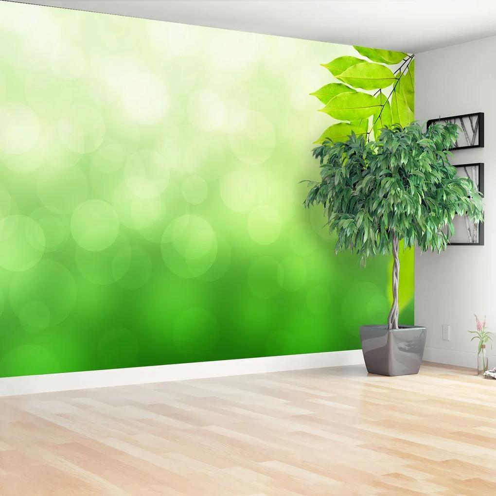 Fototapeta Zelená větev