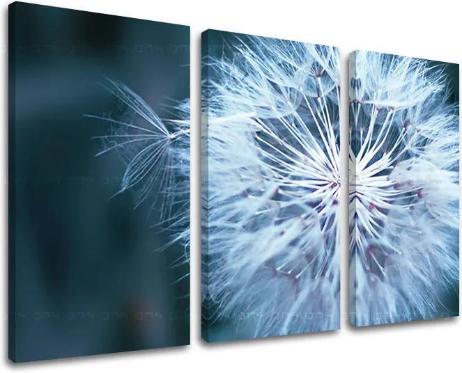 Obraz na stenu 3 dielny KVETY KV086E30