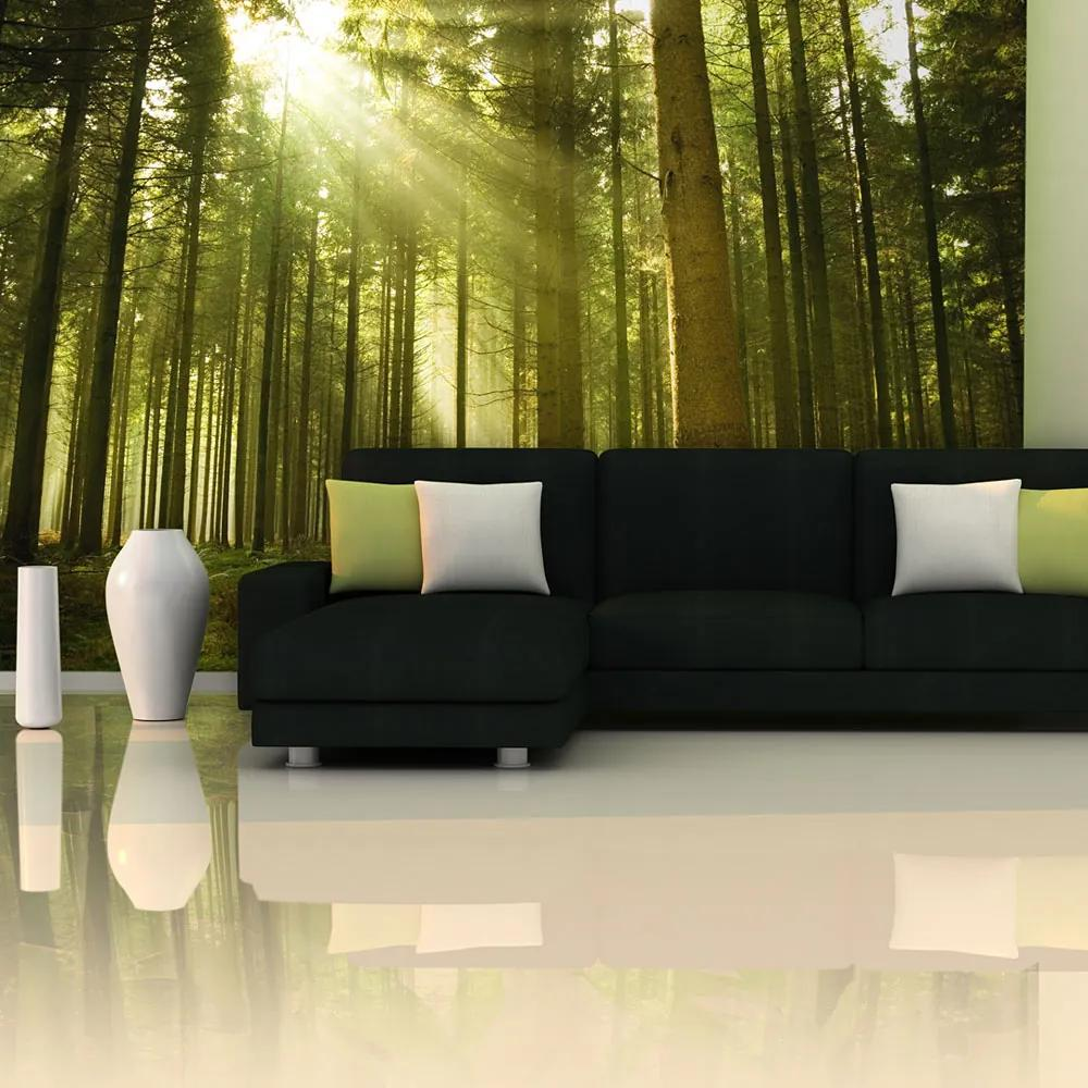 Fototapeta - Pine forest 450x270