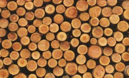 Fototapety, rozmer 368 x 254 cm, drevo, IMPOL TRADE 1068