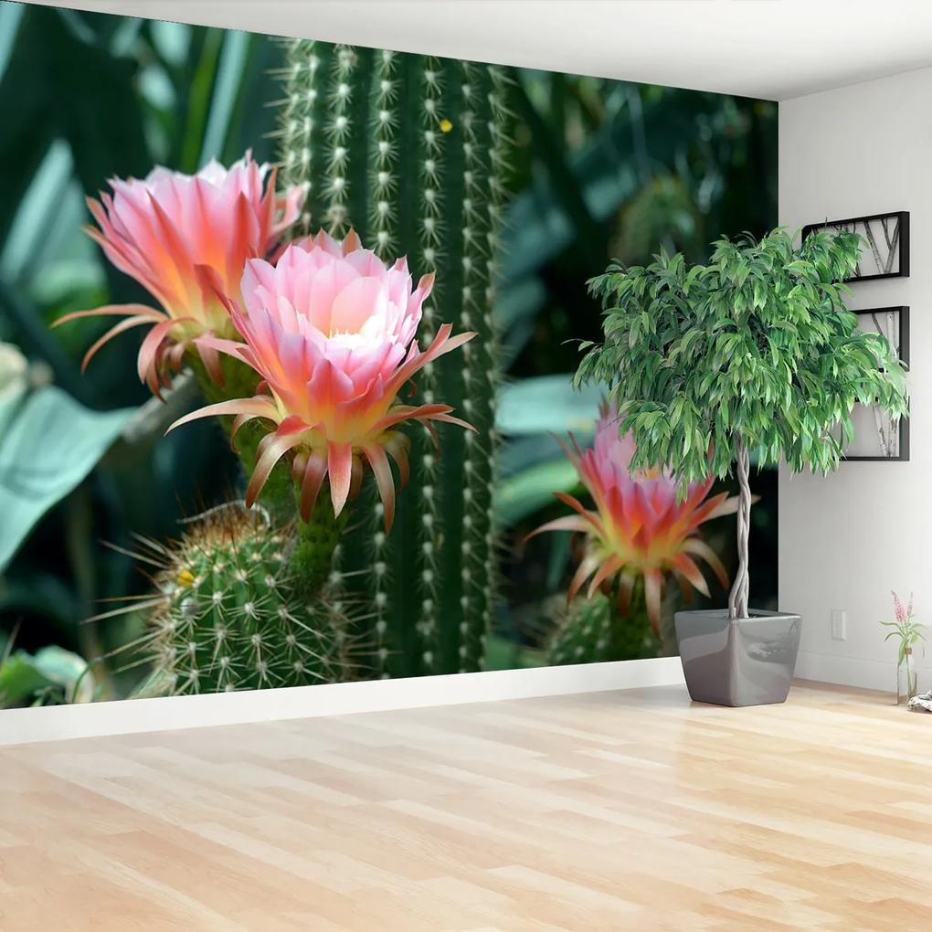 Fototapeta Kaktusový květ