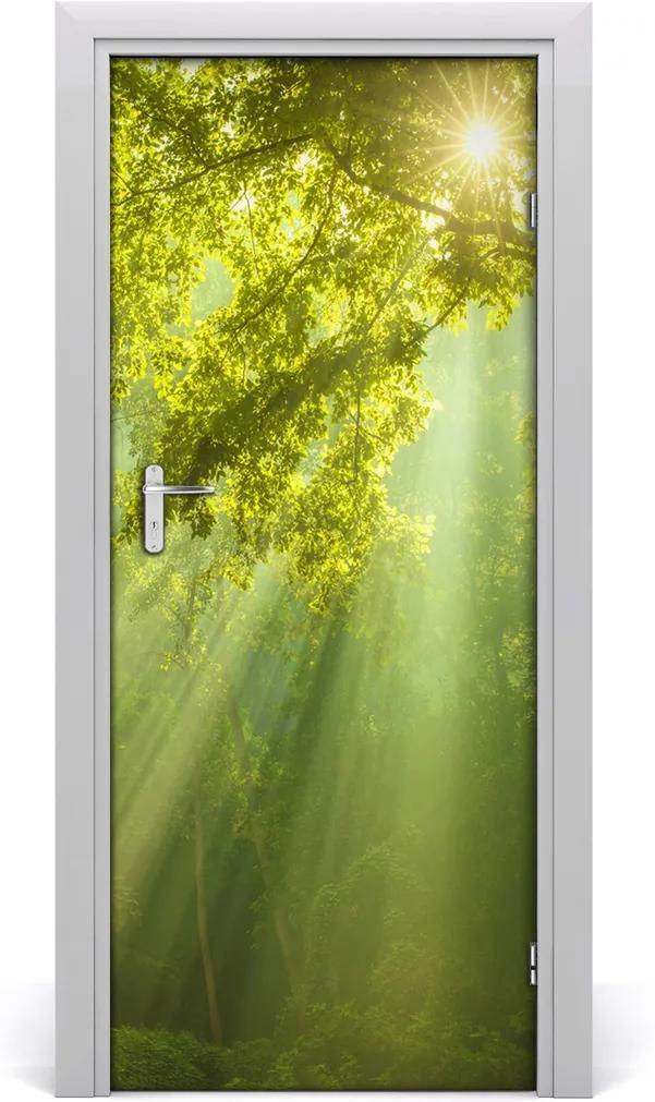 Fototapeta na dveře Slunce v lese
