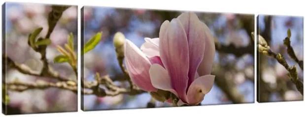 Obraz na plátne Kvitnúce magnólie 170x50cm 77A_3G