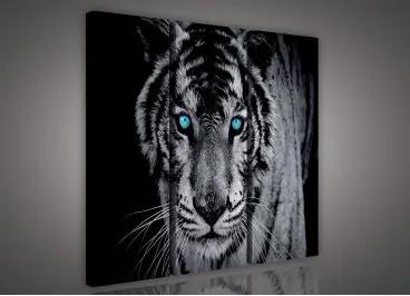 Obraz na plátne viacdielny - OB3043 - Čiernobiely tiger 90cm x 80cm - S6