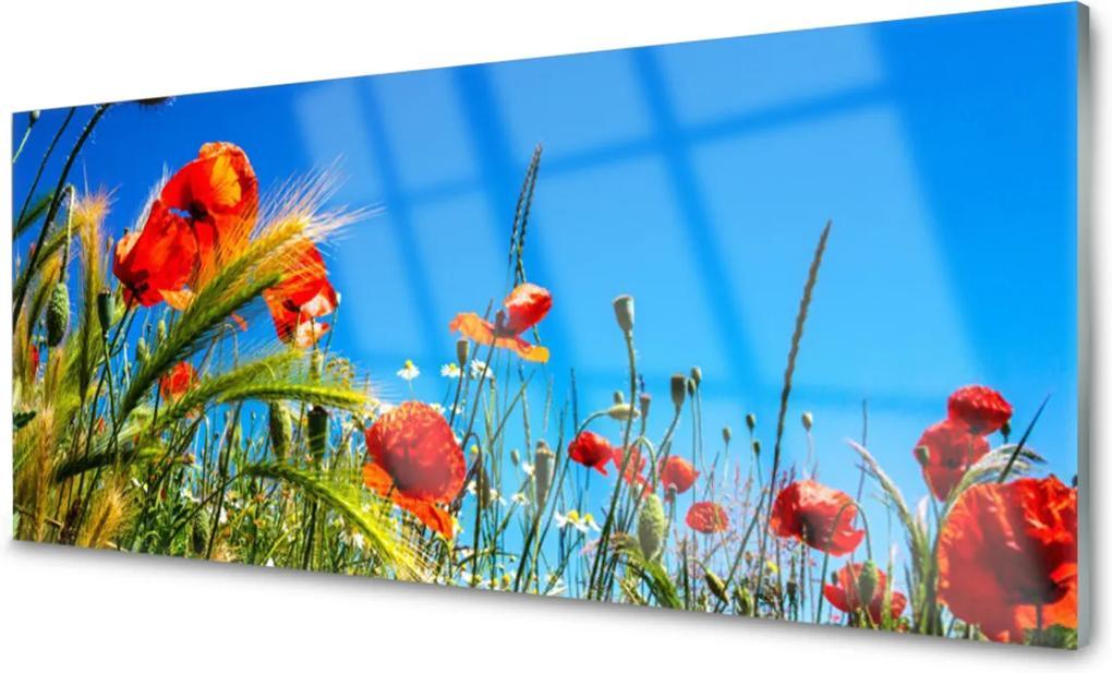 Sklenený obklad Do kuchyne Kvety Maky Pole Trávy