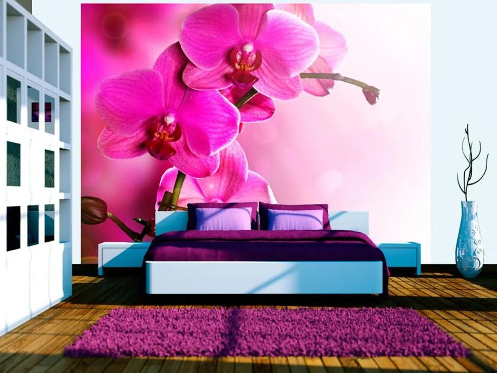 Murando DeLuxe Fototapeta působivá orchidej 150x116 cm