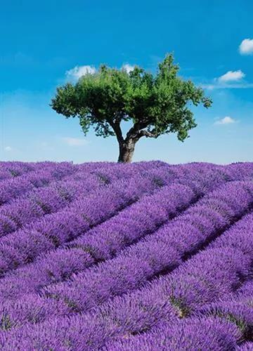 Fototapety, rozmer 183 x 254 cm, Provence, W+G 00309