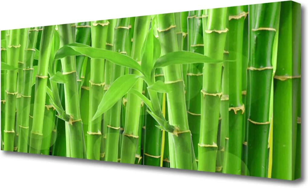 Obraz na plátně Bambus Stonka Kvet Rastlina