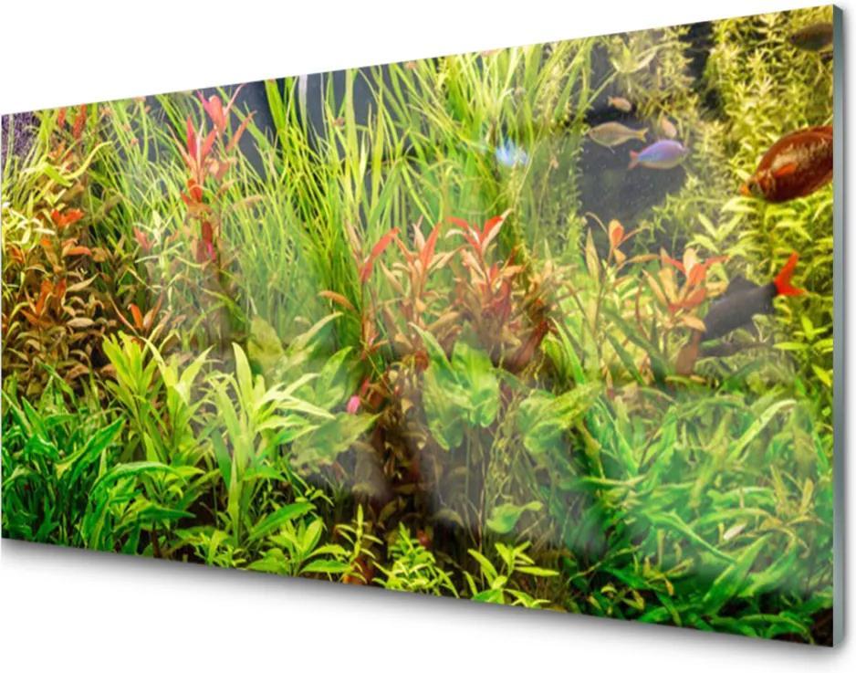 Plexisklo obraz Akvárium rybičky rostliny