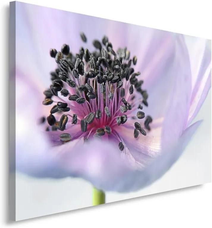 CARO Obraz na plátne - Anemone 40x30 cm