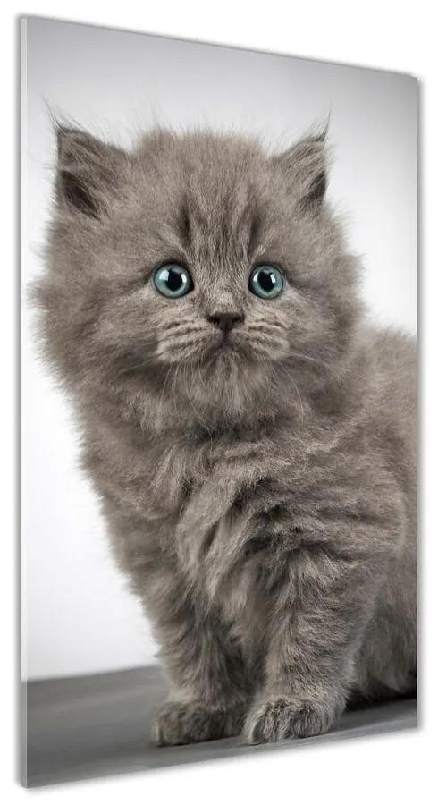 Foto obraz akrylový Sivá a britská mačka pl-oa-70x140-f-66248272