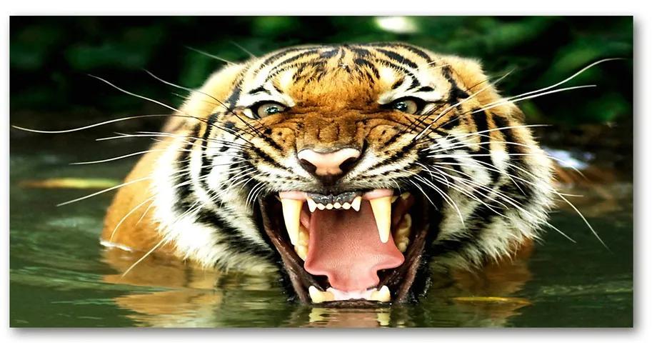 Foto obraz akrylový Revúci tigre pl-oa-140x70-f-609474