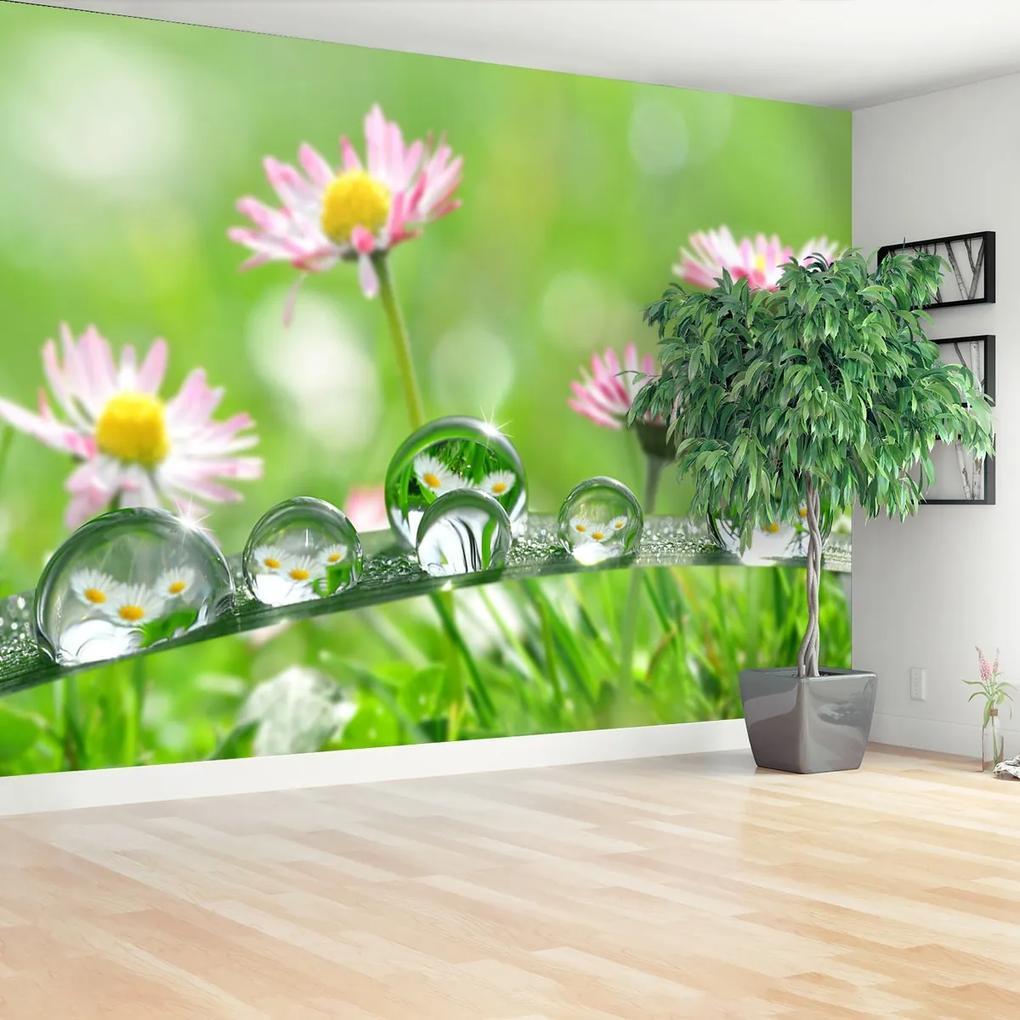 Fototapeta Sedmikrásky zelené