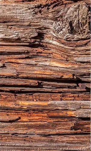 Vliesové fototapety, rozmer 150 cm x 250 cm, kôra stromov, DIMEX MS-2-0159