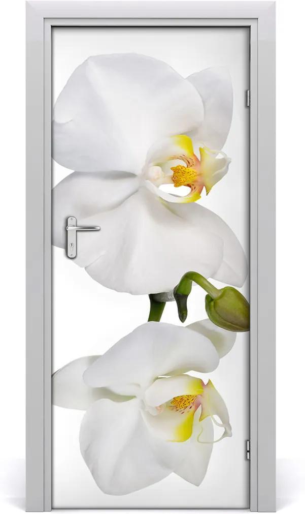 Samolepící fototapeta na dveře Bílá orchidej