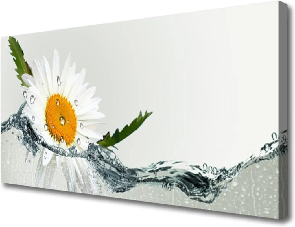 Obraz Canvas Sedmikráska ve vodě