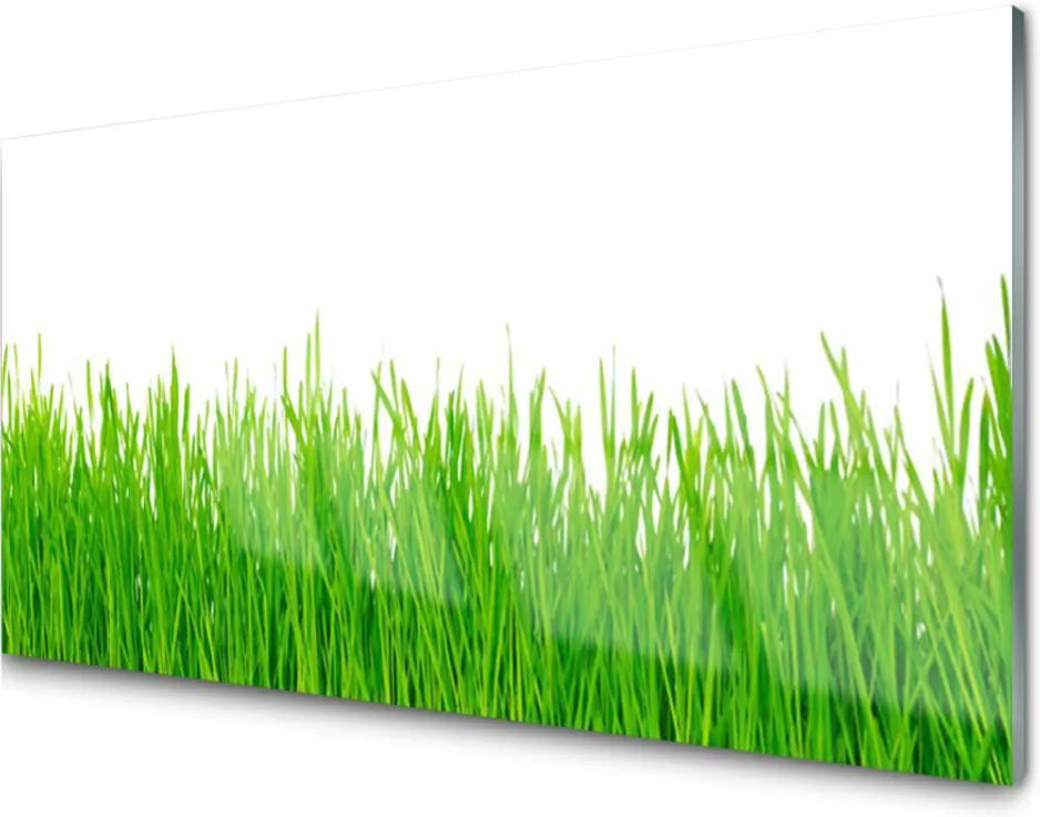 Obraz plexi Tráva Rastlina Príroda