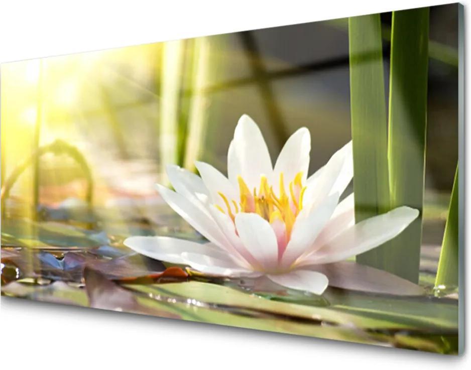 Plexisklo obraz Skleněný květ vodní lilie