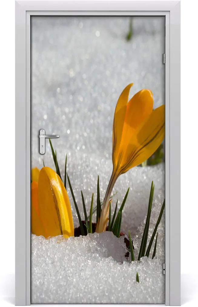 Samolepící fototapeta na dveře Žluté krokusy