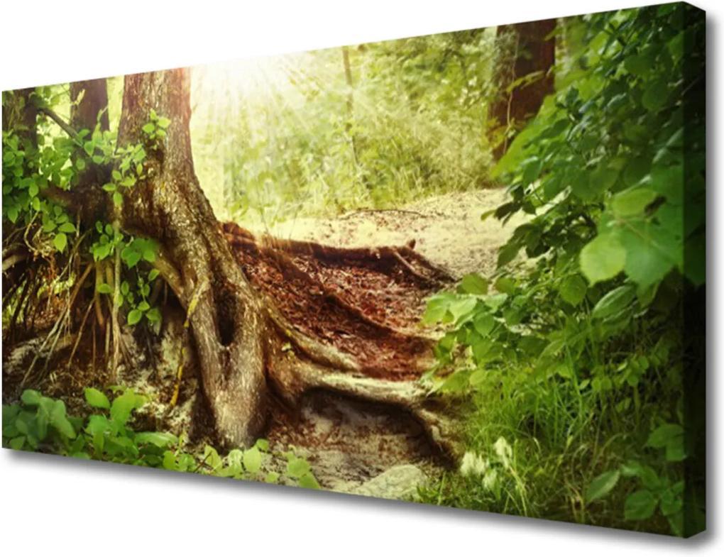 Obraz Canvas Strom Kmeň Príroda Les