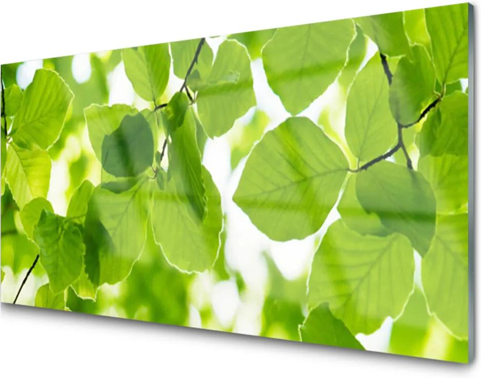 Obraz na skle Listy Príroda Rastlina