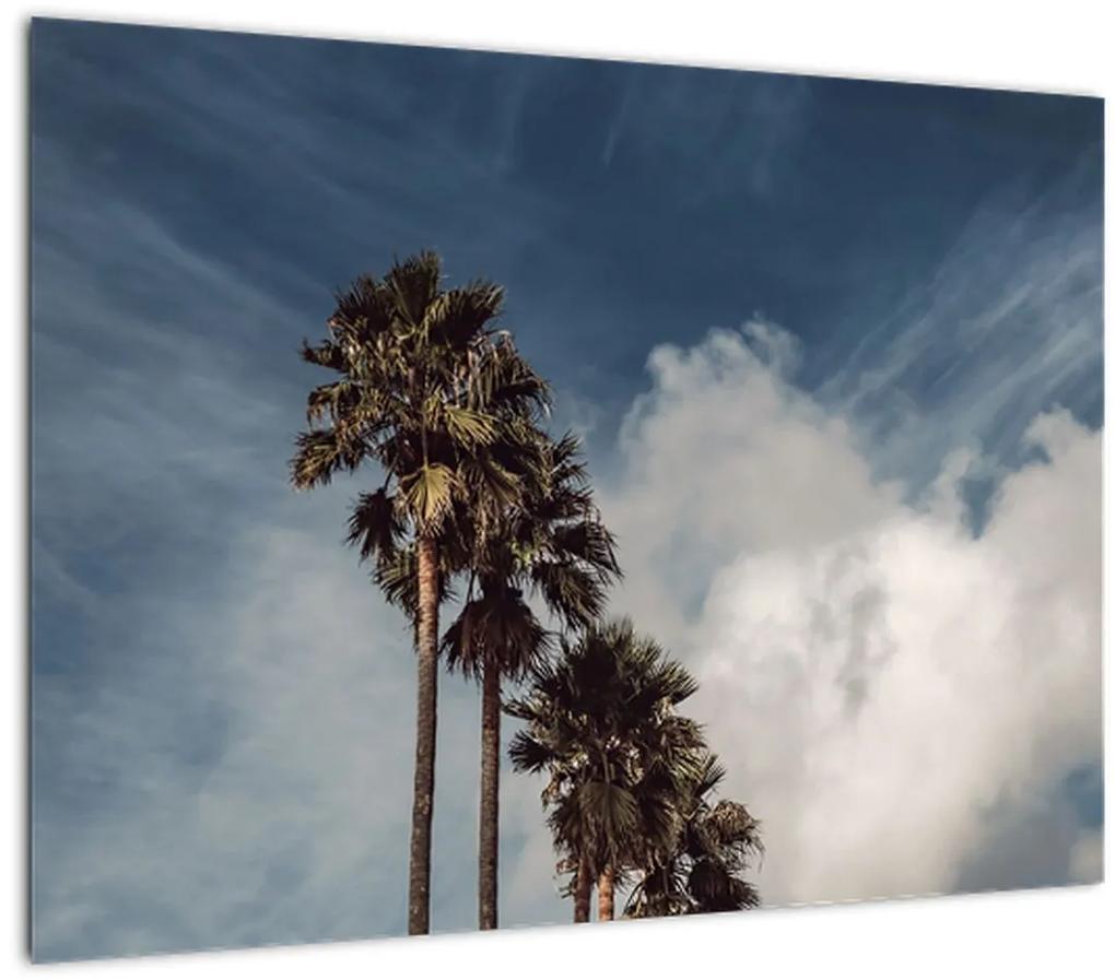Obraz - Palmová dráma (70x50 cm), 40 ďalších rozmerov