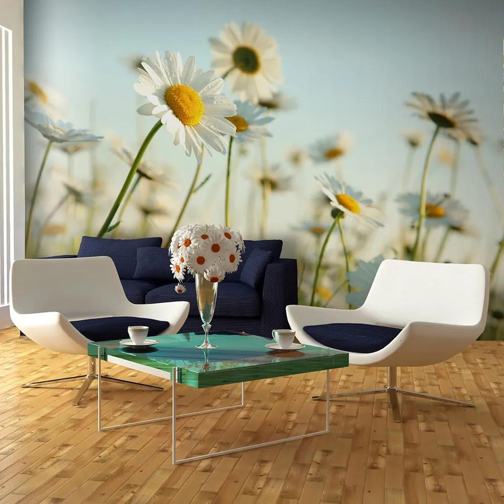 Fototapeta - Daisies - spring meadow 450x270