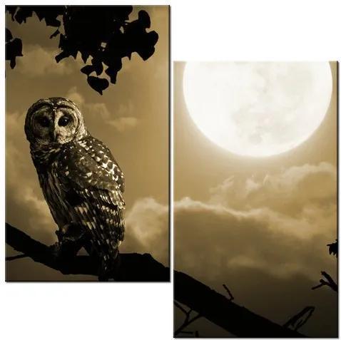 Tlačený obraz Sova na konári a spln mesiaca 60x60cm 2182A_2A