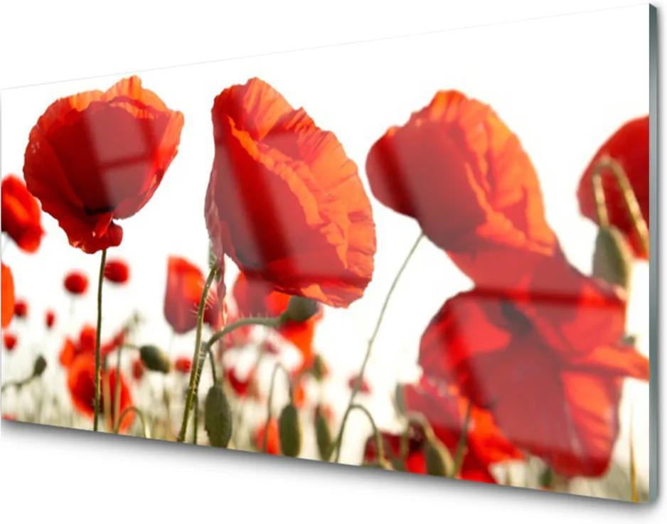 Obraz na skle Skleněný tulipány květiny